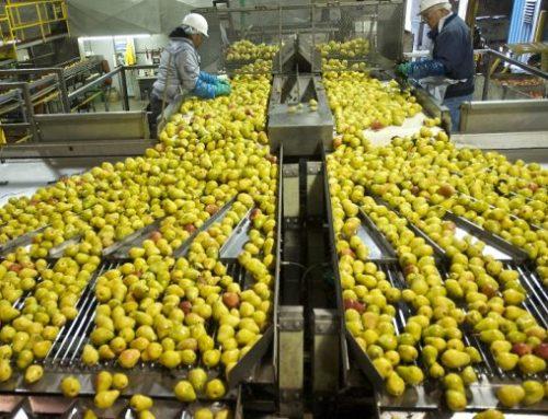 Διαλογή Φρούτων