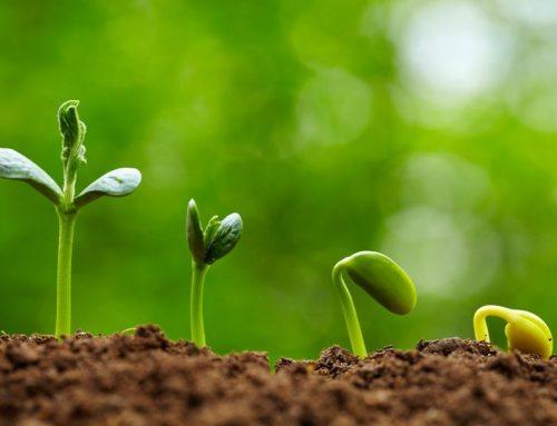 Θρέψη Φυτών