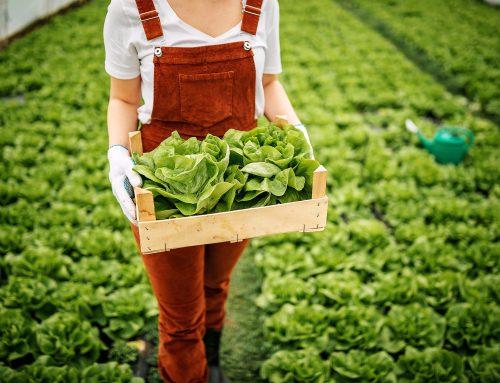 Κίνδυνος διαταραχής της αγροτικής παραγωγής από τα πράσινα οράματα